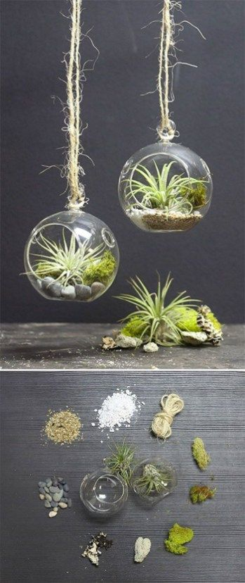 46 Great Air Plant Terrariums Ideas For Your Stunning Home House