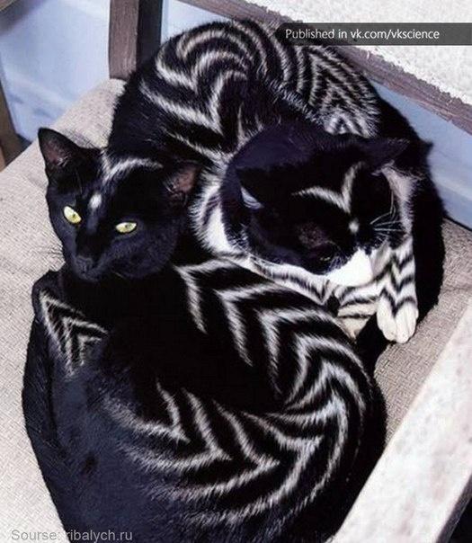 The Art of Feline Colouring