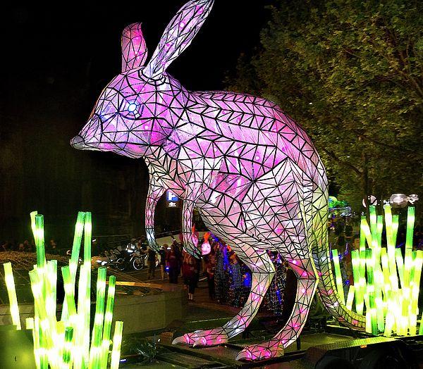 Greater Bilbie Light Sculpture
