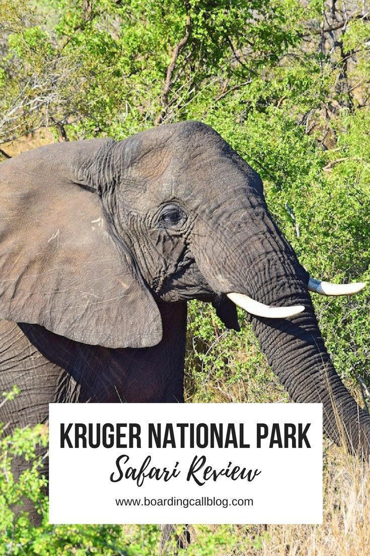 How to do an epic South African safari in Kruger Park!