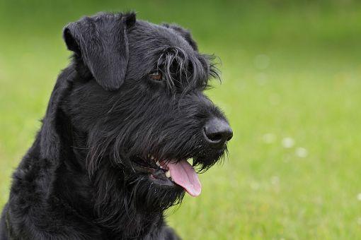 Черный пёс с душой - почитайте.