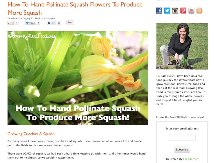 Tour Our New Website: Growing Real Food And My Take On Building Your Own Website