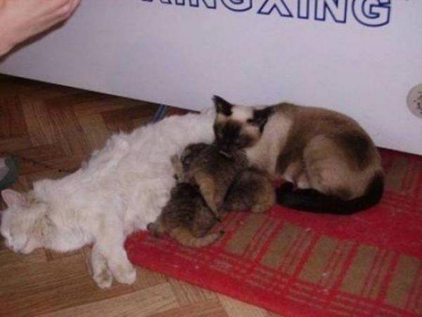 Not Regular Kittens - Neatorama