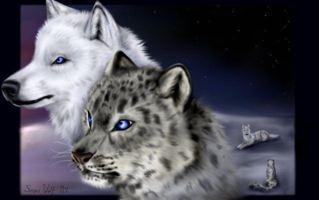 Snow and wolf