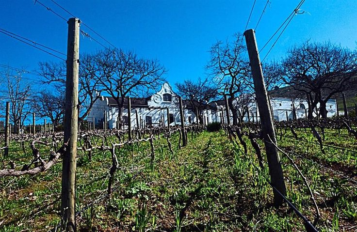 The DeMorgenzon wine estate vineyards in Stellembosch, some 50km north of Cape Town. The estate has a strong focus on chenin blanc and chardonnay, but also produces classic reds syrah and pinot noir.