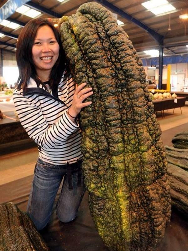 Légume géant, record... Planter des graines, Légume