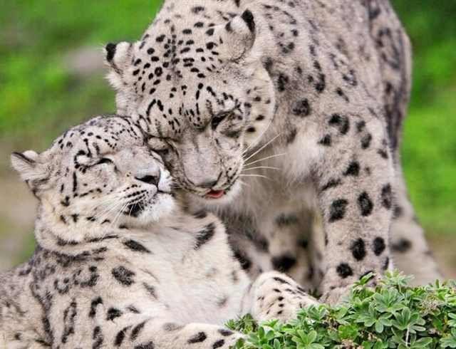 Animais e Seus Filhotes!                                                                                                                                                                                 Mais