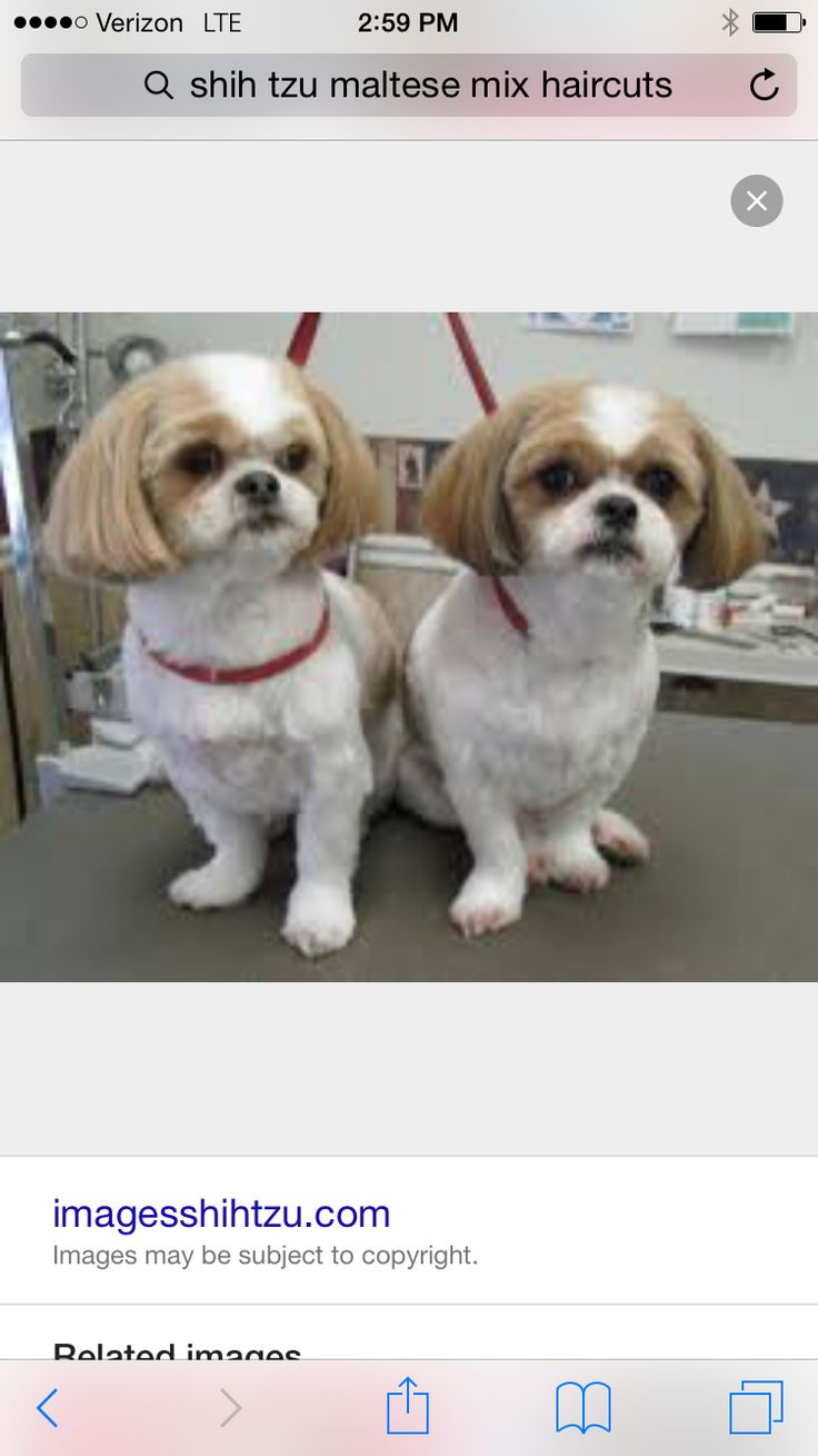 The 7 Best Dog Images On Pinterest Pets Shih Tzus And Cutest Dogs