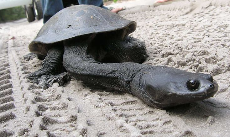 18 Very Rare Animals You Had No Idea They Exist. What the…