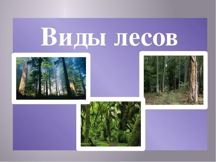 виды леса: 26 тыс изображений найдено в Яндекс.Картинках