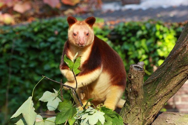 10 excepcionais espécies em risco de extinção | HypeScience