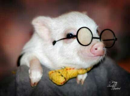 When I get a pig he will always be dresses up like Harry Potter