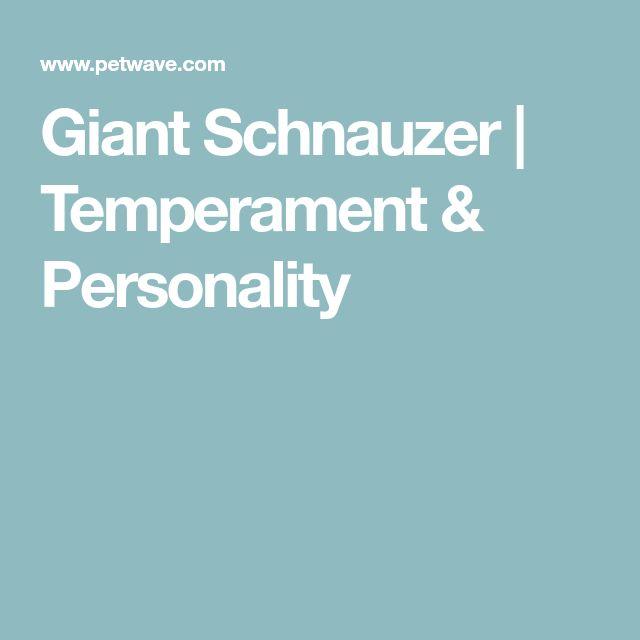 Giant Schnauzer | Temperament & Personality