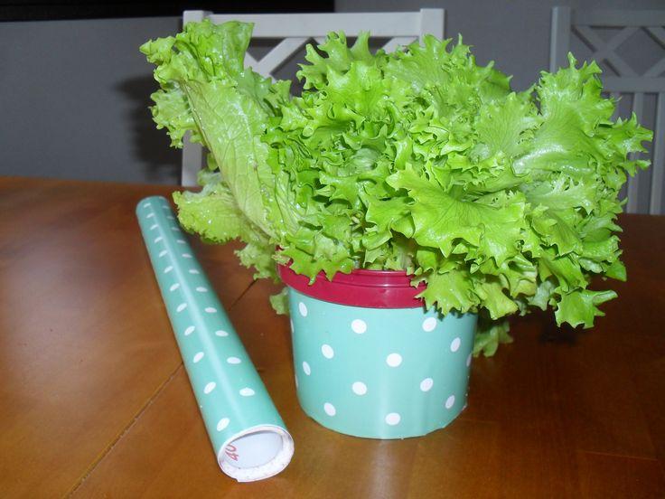 diy , salaatille säilytysrasia , vanha hillopurkki päällystetty kontaktimuovilla