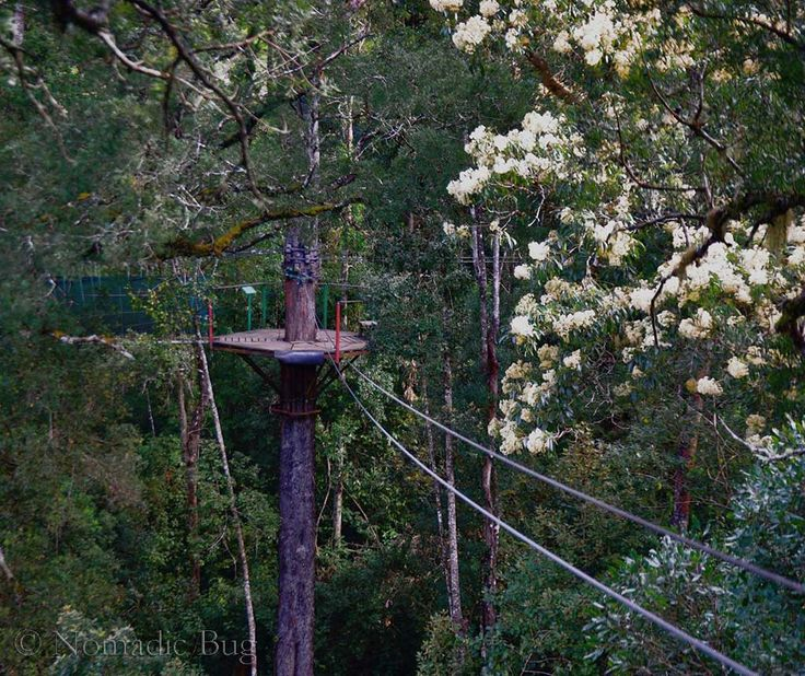 Platform 5, The Tsitsikamma Canopy tours, Garden Route, South Africa Nomadic Existence