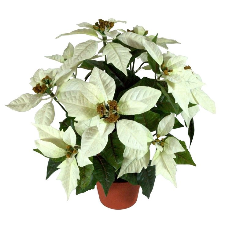 Biała Gwiazda Betlejemska w doniczce o dziwięciu kwiatach to doskonały dodatek na święta. Ekskluzywne kwiaty sztuczne z VillaFlora.pl