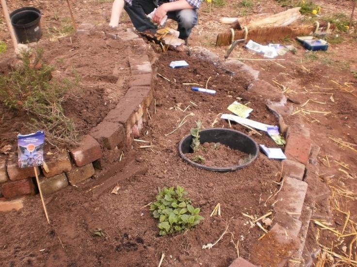 1000 idee n over rozemarijn planten op pinterest tuinpotten kruiden binnenshuis kweken en - Zoals mediterrane ...