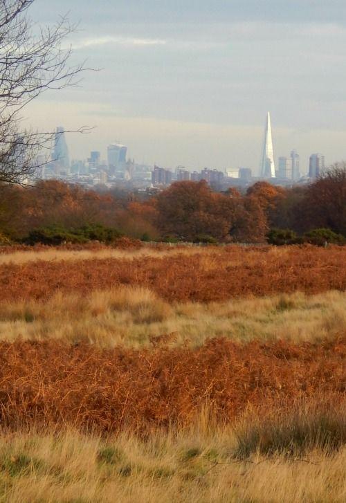 London's skyline from Richmond Park