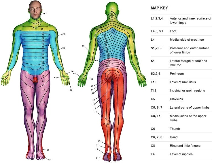 back surgery the times and maps on pinterest : dermatome diagram - findchart.co