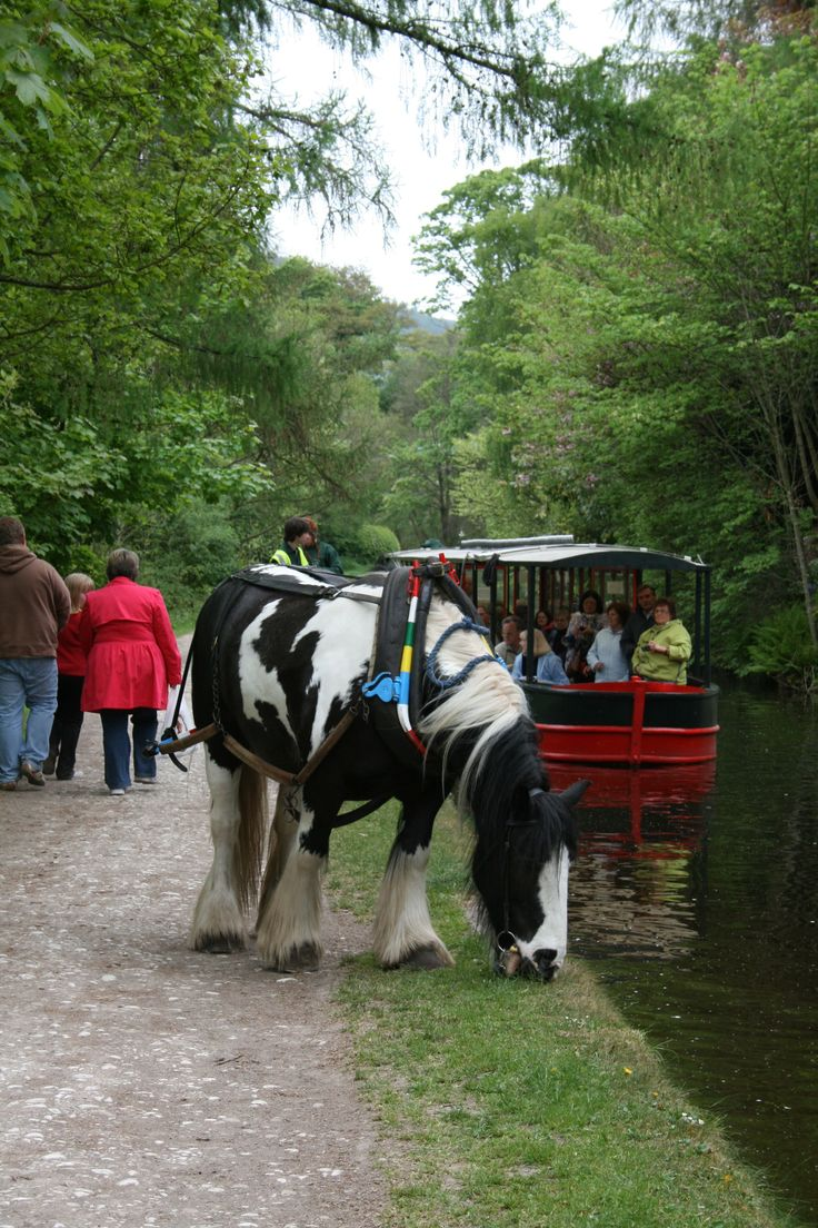 Horse Towed Canal Boat Llangollen Canal Wales