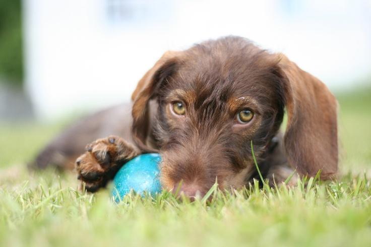 Cute dogg