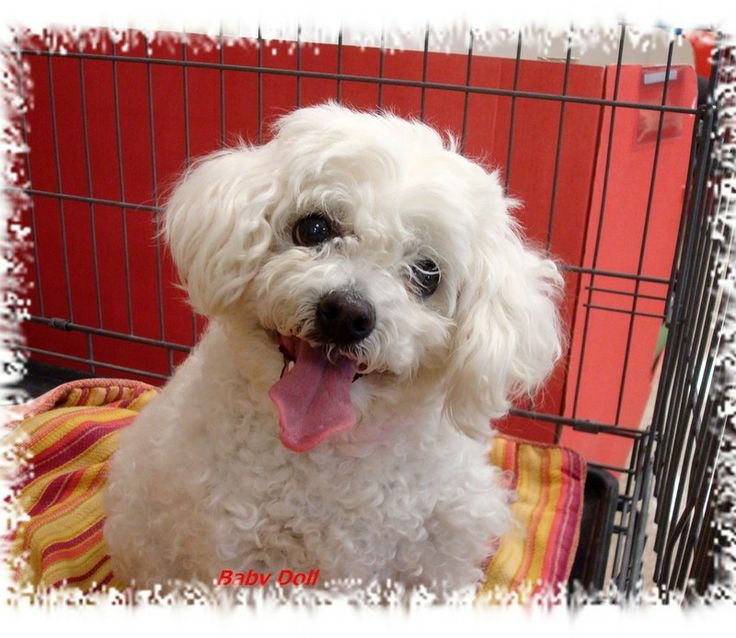 Hello, I'm a 7 year old that is looking for a forever home.While I'm waiting for my forever home, a foster home is needed for me or my other rescued friends.I was rescued from a shelter on my last day on earth .For quicker response, email us at...