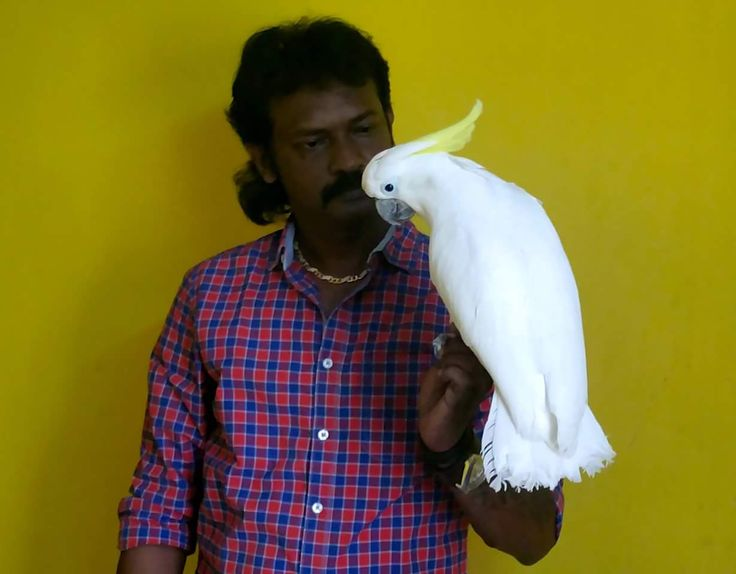 Totally tamed and talking Greater Sulphur Cockatoo visit us at -  www.preethifarms.com