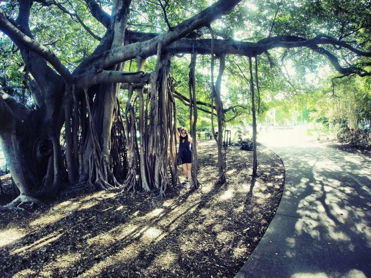 Jardin botanique de Brisbane - Australie Australia - http://breakinggood.fr/