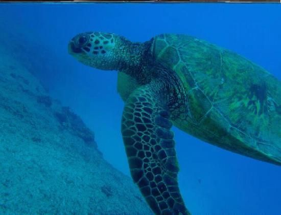 saipan northern mariana islands   Paraseiring Manyagaha - Picture of Saipan, Northern Mariana Islands
