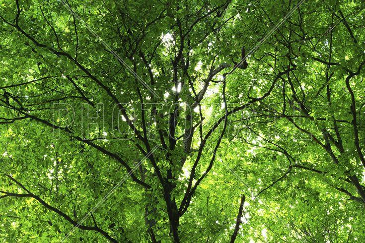 Green Forest in Spring - Fototapeter & Tapeter - Photowall