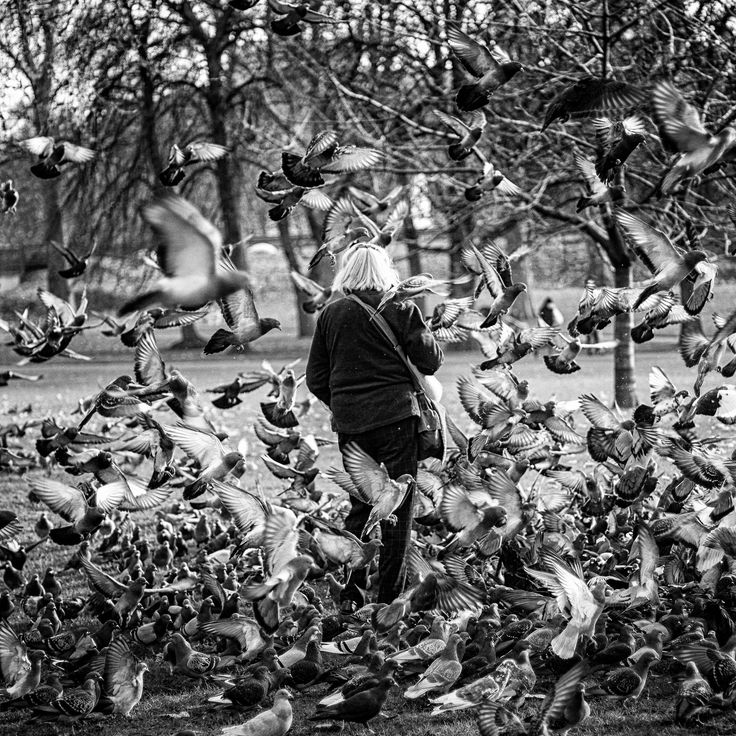 https://flic.kr/p/23xaXRv | Pájaros en la cabeza | © All rights reserved. Do not use without written permission from photographer.