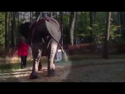 Nosey the Elephant Needs Your Help in New Jersey! | Action Alerts | Actions | PETA