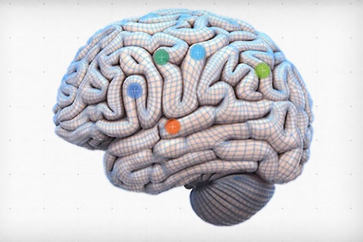 Which part of your brain holds your memories? Where are elements of your personality stored? Click around on this interactive model of the brain to find out.