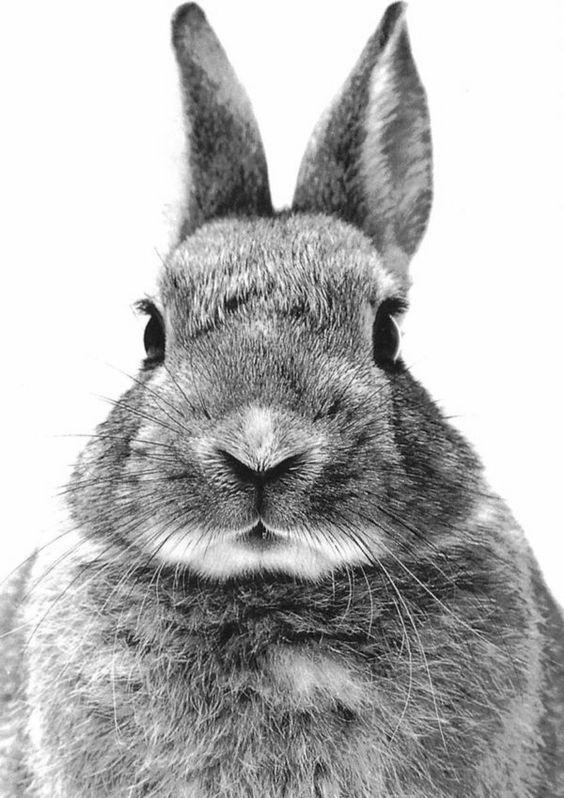 Coucou lapin, portrait en noir et blanc