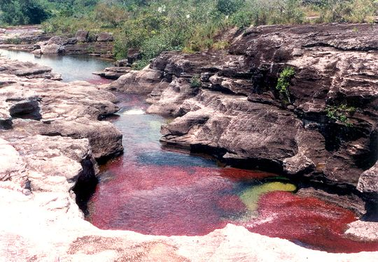 Caño Cristales, paisajes de Colombia, lugares únicos, turismo en Colombia, turismo