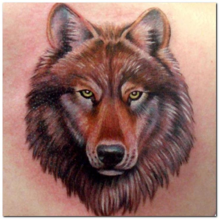 cool 11 Designs Ideas For Wolf Tattoos