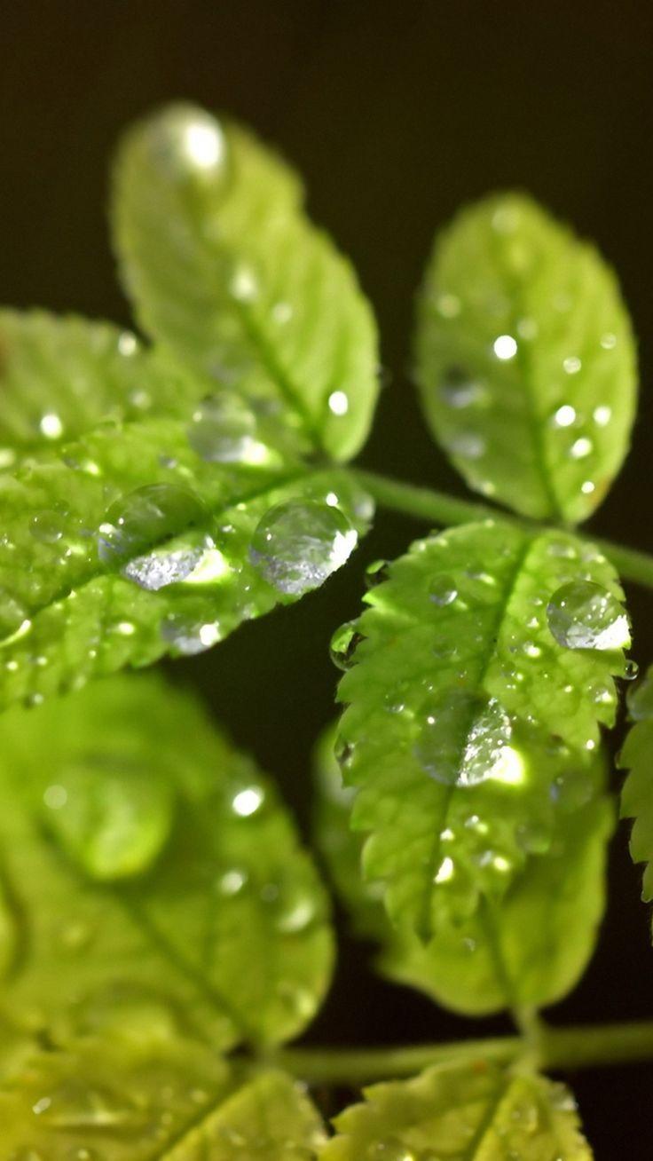 Macro Leaf Water Drop Iphone 6 Plus Wallpaper Iphone 5s