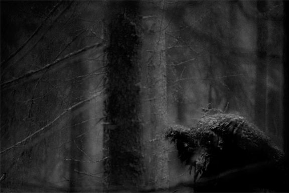 Mats Andersson – John Bauers skogar | Abecita Konstmuseum