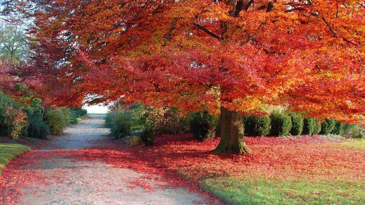 autumn desktop wallpaper
