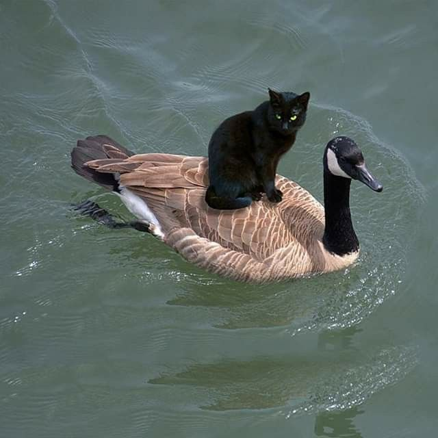 Ain't nothing wrong with hitching a ride. I do…