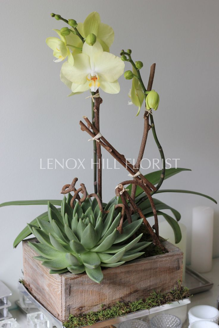Orchid and Succulent - Orchids and Succulents. Orchid ArrangementsFlower ...