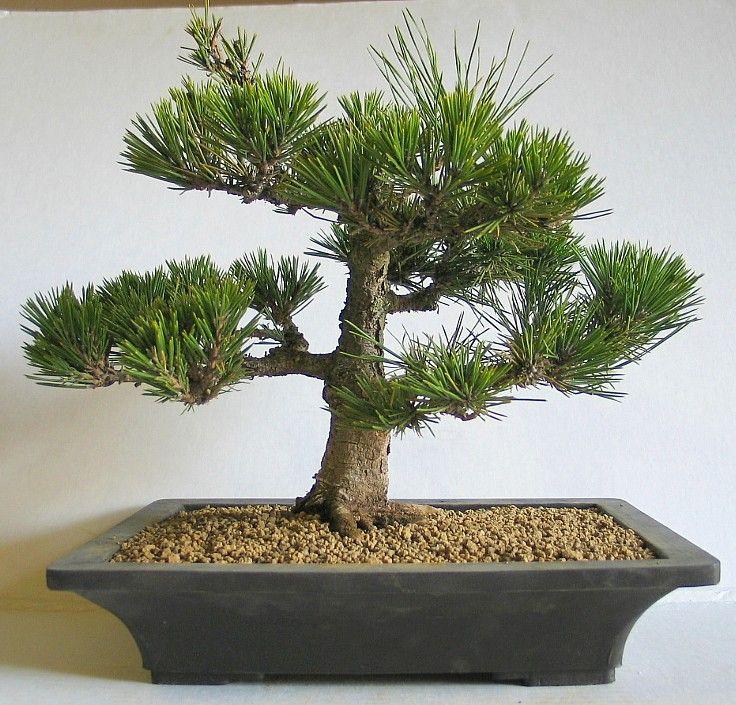 53 best ideas about December Flowers on Pinterest | Pine ...