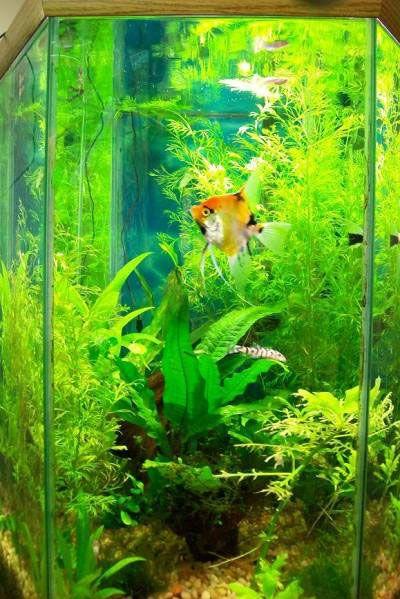Cool aquarium aquariums pinterest aquariums fish for Cool freshwater fish