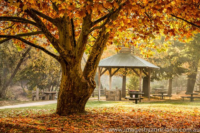 Bright Victoria in Autumn truly spectacular click on this and have a look