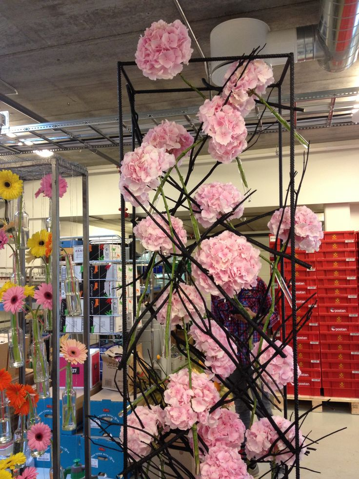 Stativ med lyse rose Hortensia