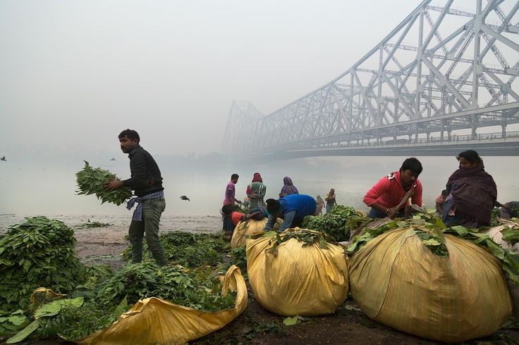 """Sorting Leafs - People sorting through leafs by Howrah Bridge in Kolkata on a cold and misty morning by the Ganga. The leafs are used in temples for deity worship and floral decorations at events such as weddings and various special occasions. The flowers are then sold nearby at the flower market.  <a href=""""http://www.drewhopperphotography.com"""">Website</a>  Follow my other social platforms:  <a href=""""https://www.facebook.com/DrewHopperPhotography/"""">Facebook</a>  <a…"""