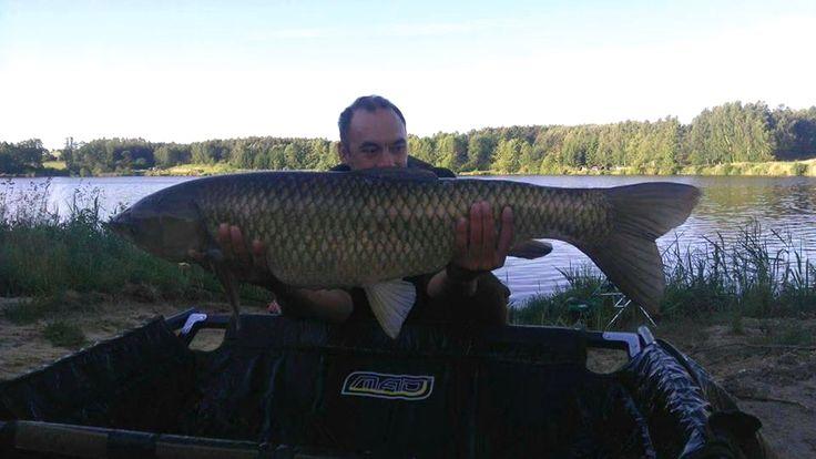 Grass Carp from forest Carp Lakes inOborniki Poland  12.4 Kg