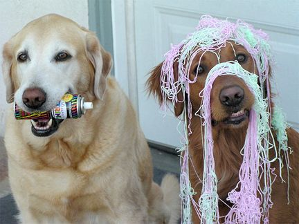 Write 3 paragraphs explaining what just happened.Parties Animal, Funny Dogs, Silly Dogs, Funny Animal, So Funny, Dogs Funny, New Years, Golden Retriever