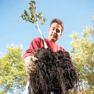 Learn how to plant a healthy fruit or shade tree that'll live and thrive for decades. It's all about selecting the best tree, digging the hole the right way, handling the tree properly and placing it in the right location. Plant it in the spring or fall and keep it watered but not soaked. We'll show you how.