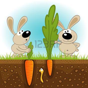 hazen+grote+en+kleine+wortelen+-+vectorillustratie